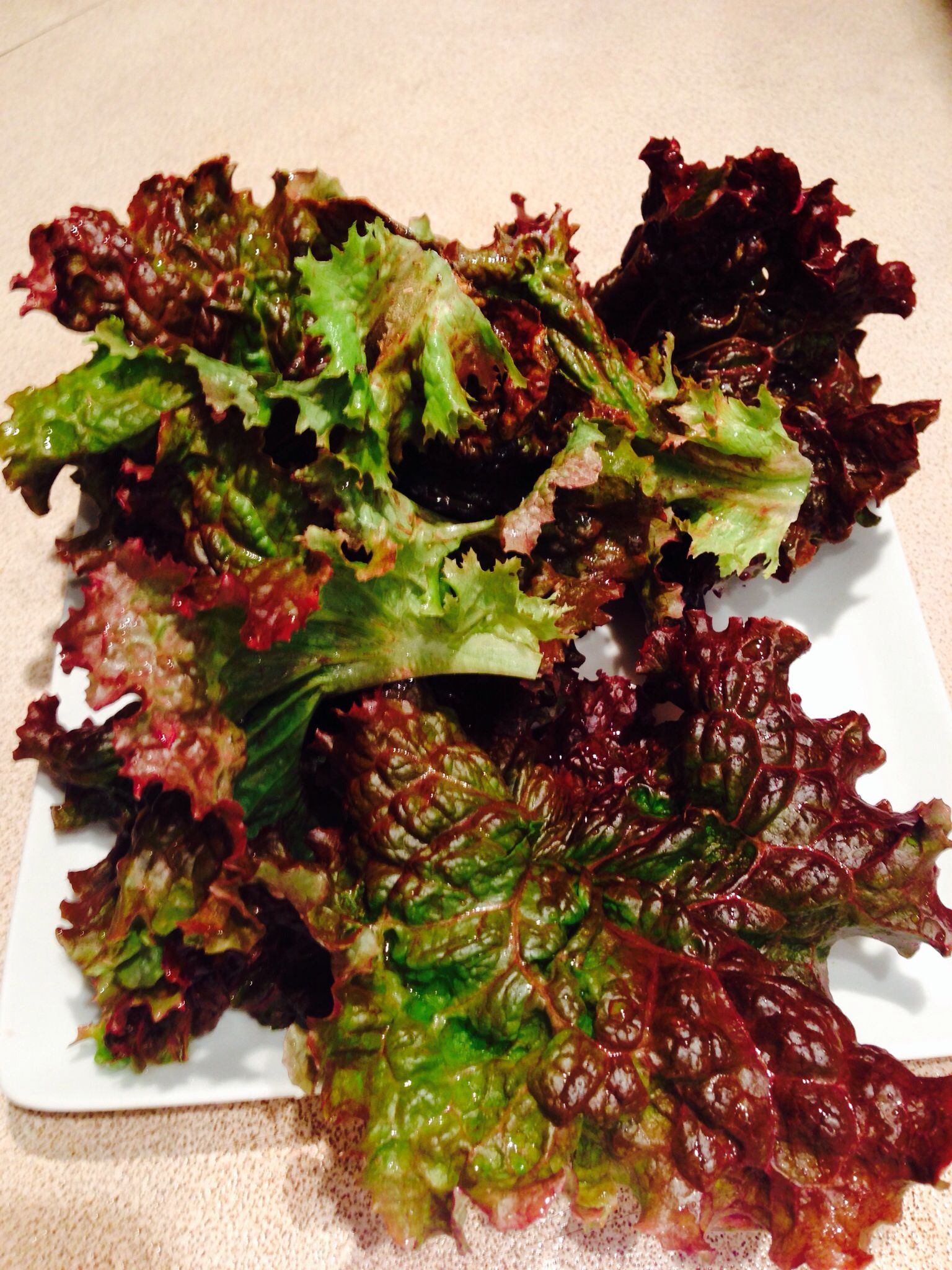 Winter gardens are the easiest gardens. Grow red leaf lettuce ...