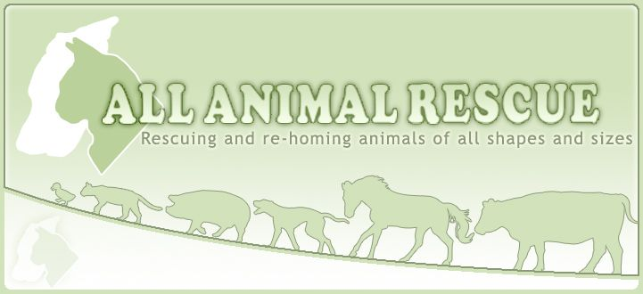 All Animal Rescue Cute Pets Animal Welfare Cats Pets Animal Rescue