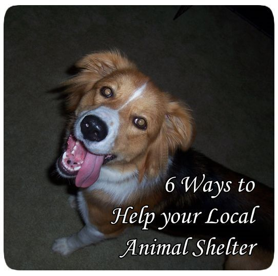 6 Ways You Can Help Your Local Animal Shelter The Foster Pack Animal Shelter Animal Shelter Volunteer Animals