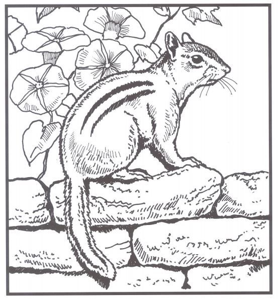 backyard animals and nature coloring books free coloring pages clip art coloring pages. Black Bedroom Furniture Sets. Home Design Ideas