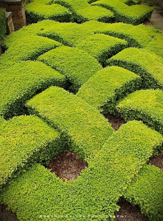 A knot garden is a garden of very formal design in a for Garden design ideas with hedges