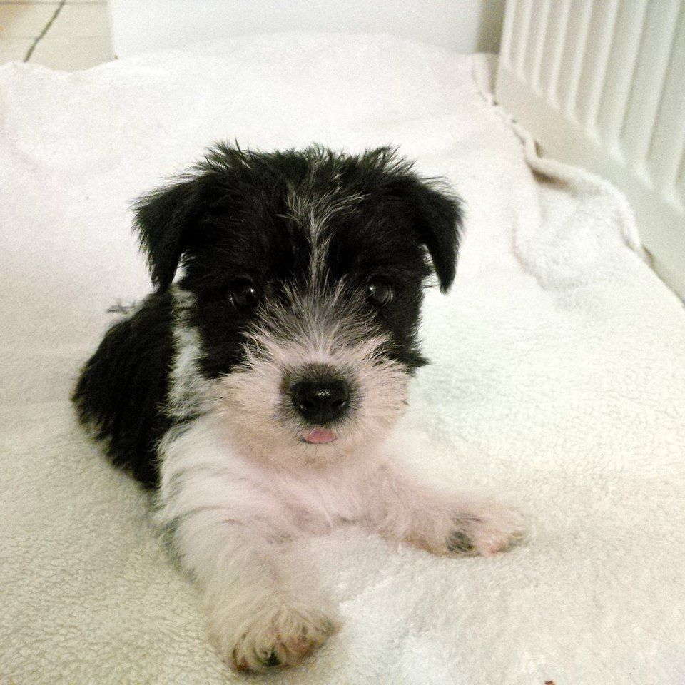 Millie When She Was 12 Weeks Old Black And White Long