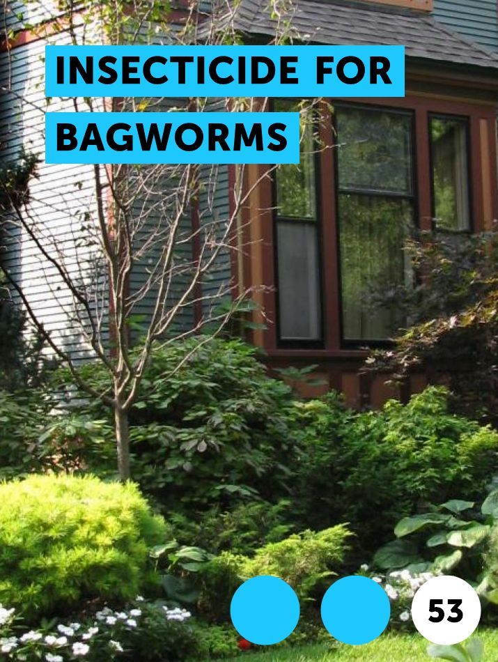 Learn Insecticide for Bagworms How to guides, tips and