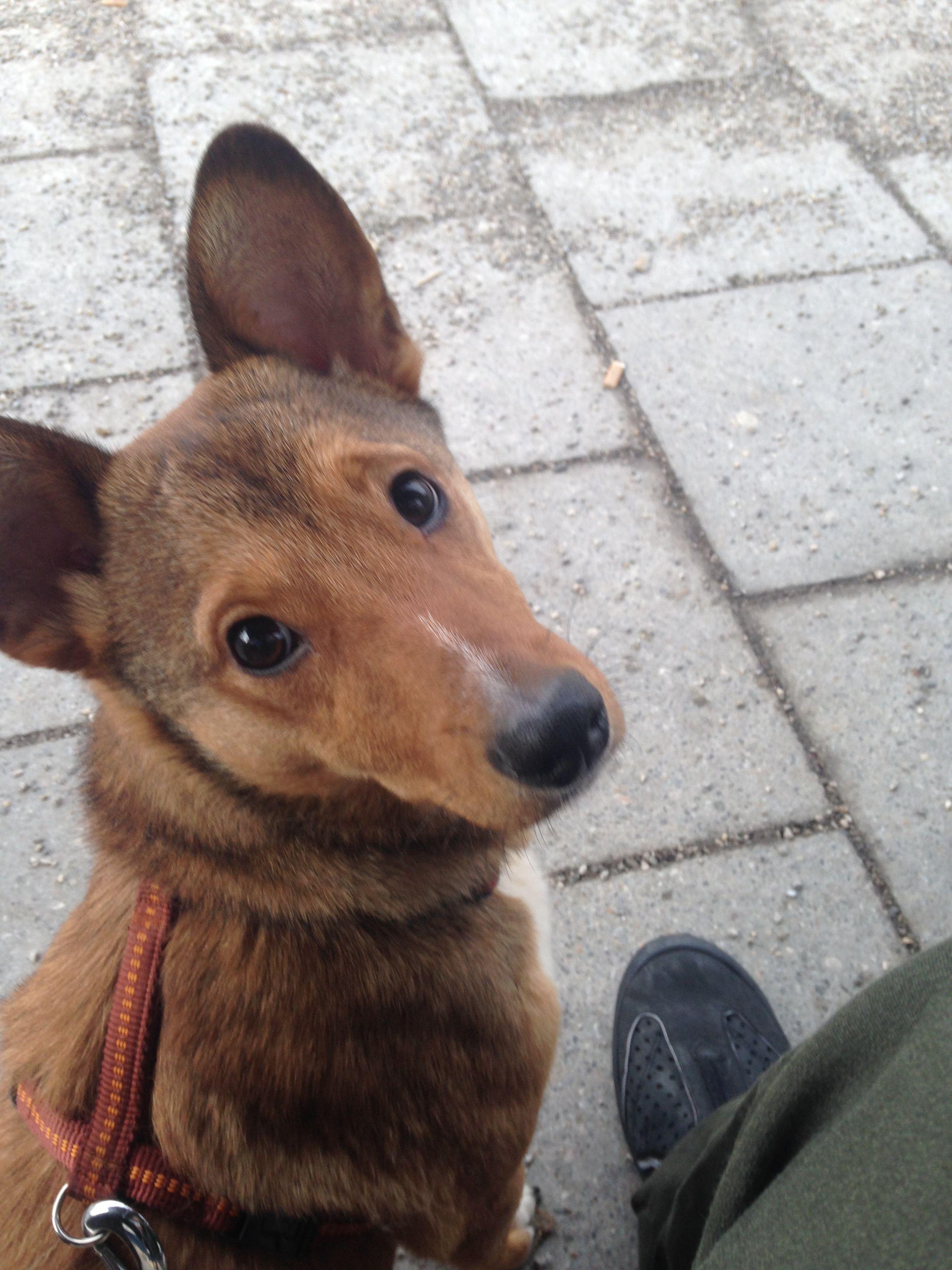Pin Von Pawshake Deutschland Auf Dogs Hunde Mischlinge Hunde Fotos Tier Fotos