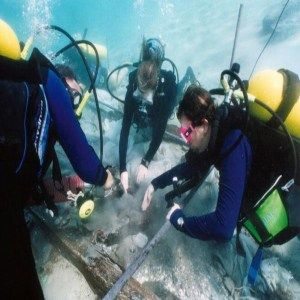 Narrow Down Your Real Passion  Marine Biology    Marines