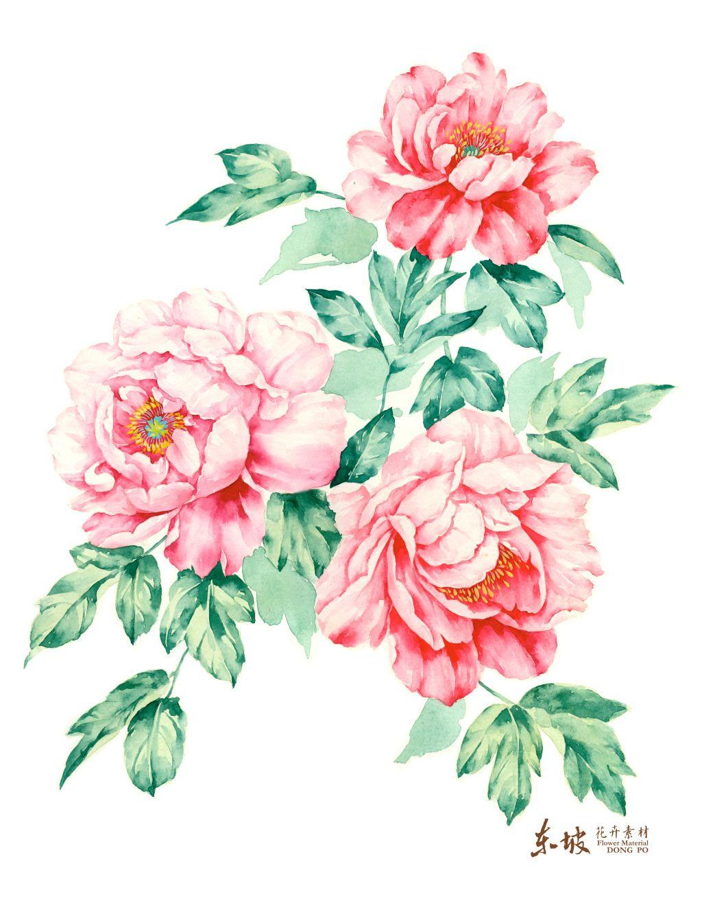 三朵手绘牡丹花图片素材免费下载 格式 jpg 大小 3936x5124像素 图片编号 17495293 千图网www 58pic com flower illustration flower art flower prints art