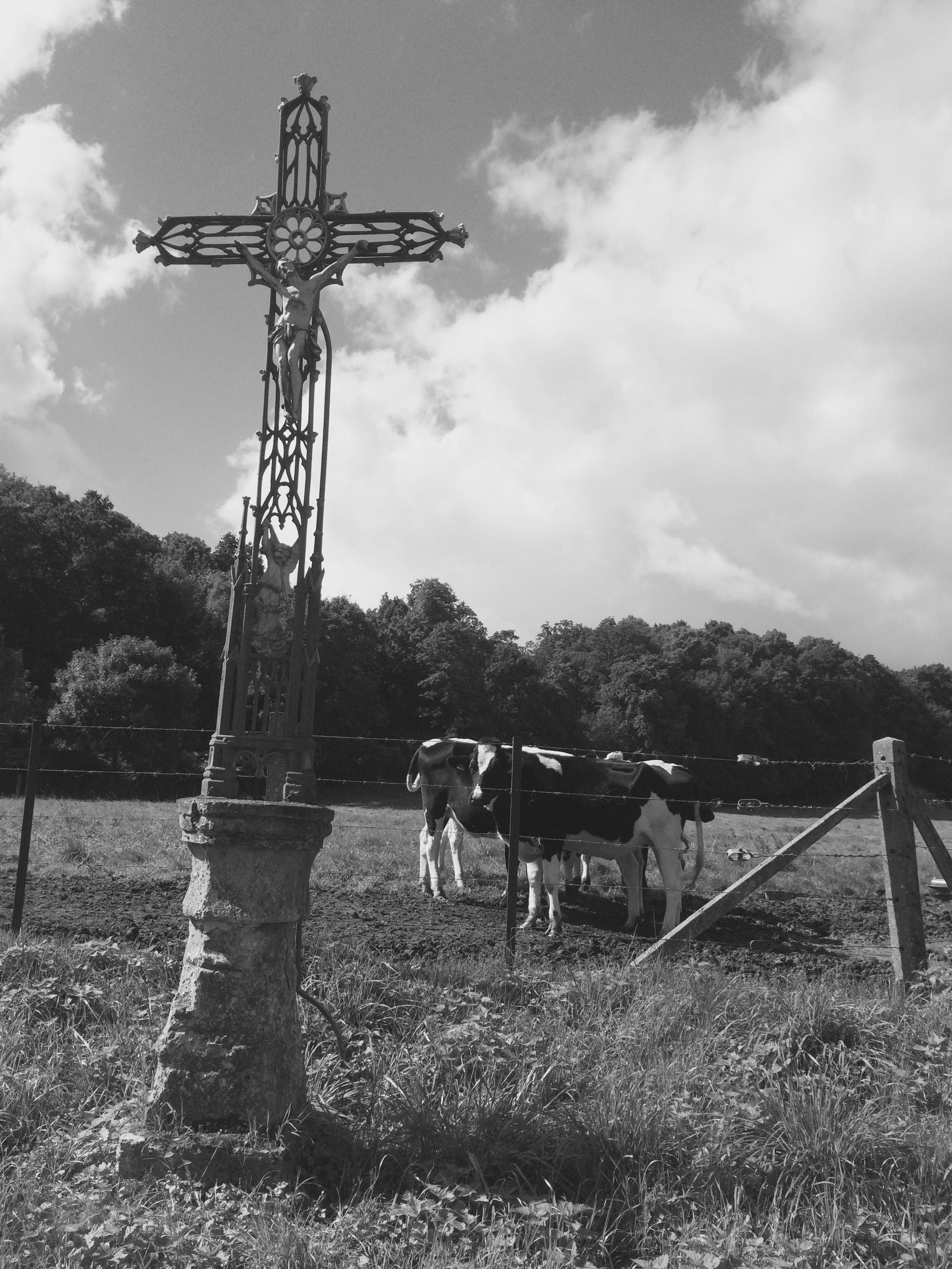 Wedding decorations yellow and white november 2018 Picard cows mooooooo  Discover Vallée de la Selle  Amiens  Somme