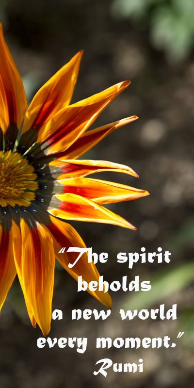 """""""The spirit beholds a new world every moment.""""  Rumi -- On image taken at TUCSON BOTANICAL GARDENS by F&J McGinn – Explore touchstone quotes on discovering the sacred at http://www.examiner.com/article/learning-to-find-the-sacred-life"""