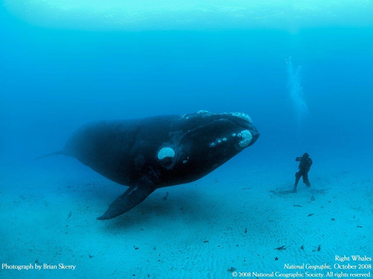 165 best wildlife photography images on pinterest wildlife