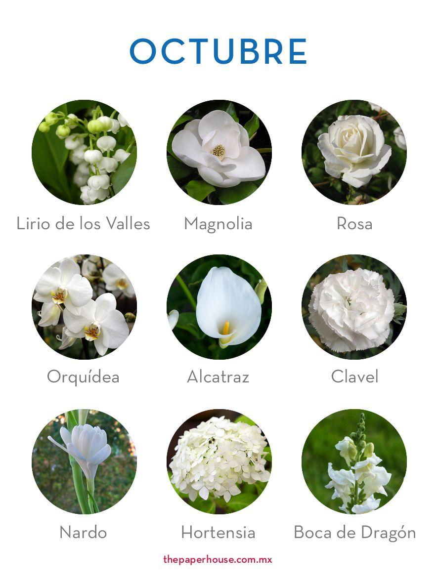 Las Mejores 12 Ideas De Flores Del Mes Nombres De Flores Flores De Temporada Flores