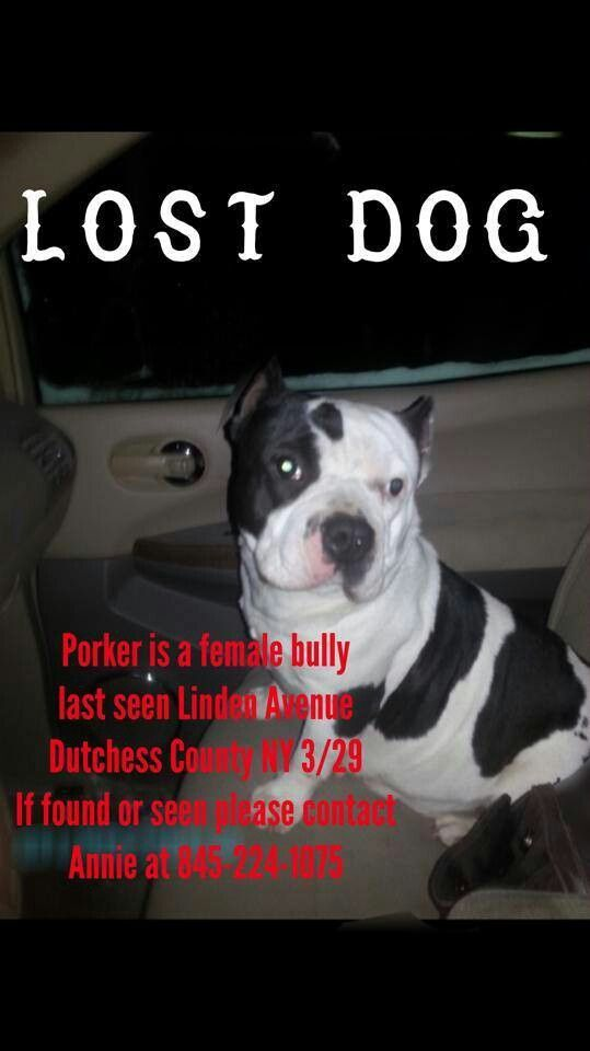Lost dog! Porker's family misses her like crazy! Losing