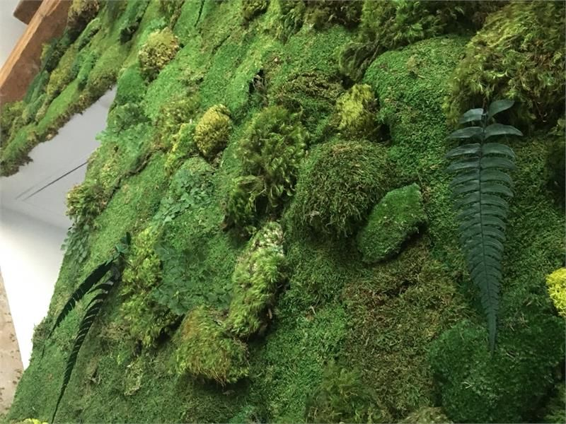 You Will Be Getting A Gallon Bag Of Preserved Dyed Non Living Sections Moss These Are Great For No Light Water Situations Make Wall Fram