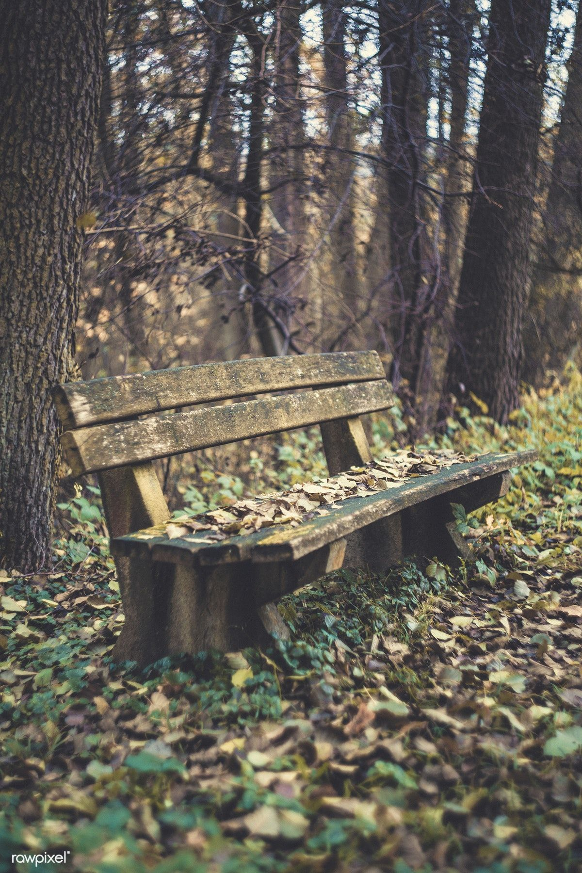 Wooden Bench In A Wood - Free Image By Rawpixelcom