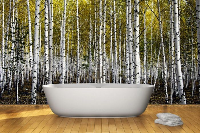Autumn birch forest wall mural kitchen pinterest for Birch wall mural