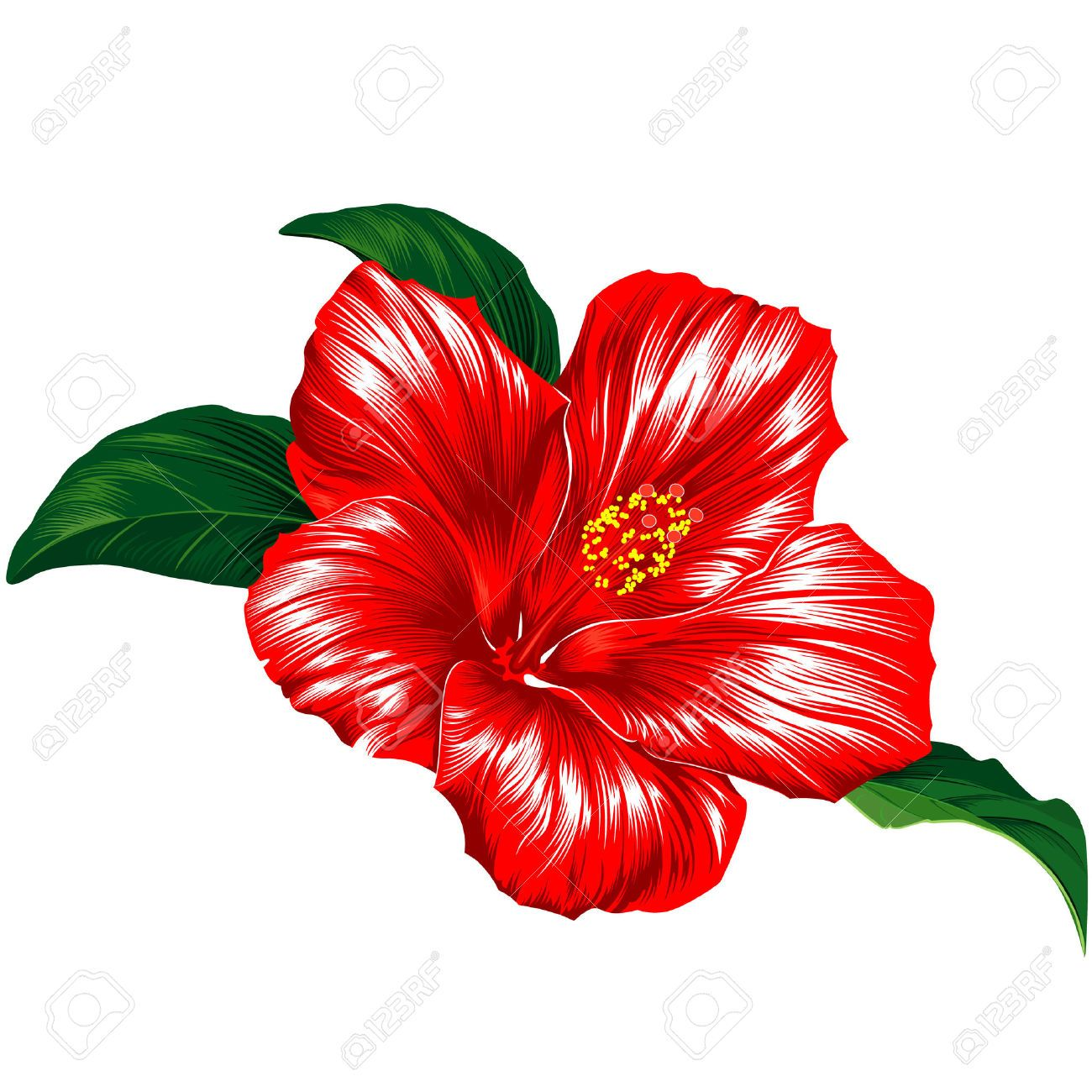 Hibiscus clipart google search hawaiian flowers tattoo ideas red hibiscus flower blossom with leaves izmirmasajfo Choice Image