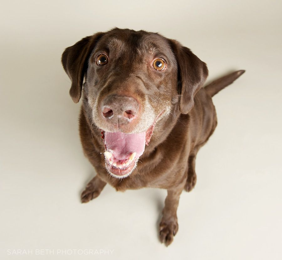 dogs tootsie is one happy gal! Sarah Chintomby beth