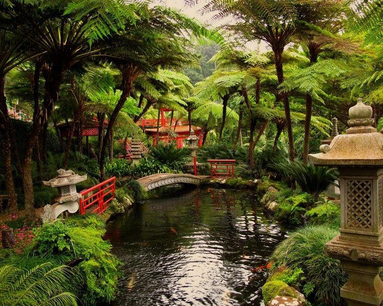 jardin japonais bassin aquatique poissons dornement pont en bois rouge et