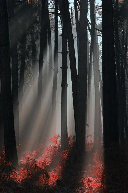 foggy woods | Beautiful nature, Scenery, Beautiful landscapes