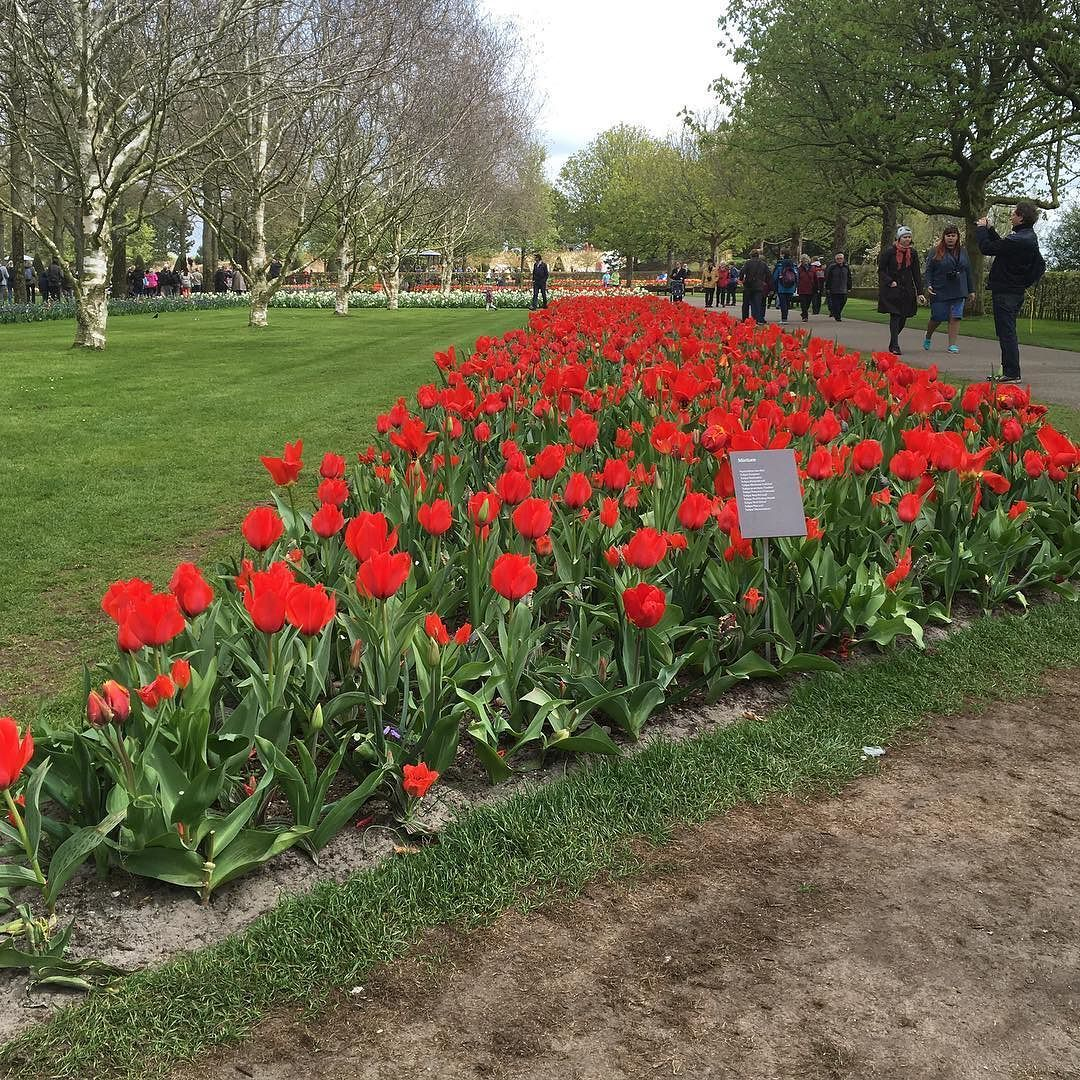 #netherlands#amsterdam#tulips#garden by jeganjagadesh