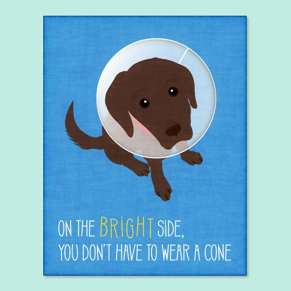 This card, featuring a dog wearing a cone, will make any