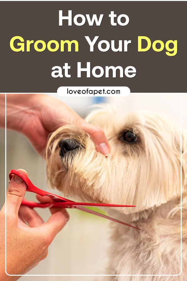 How To Groom Your Dog At Home in 2020 Puppy grooming