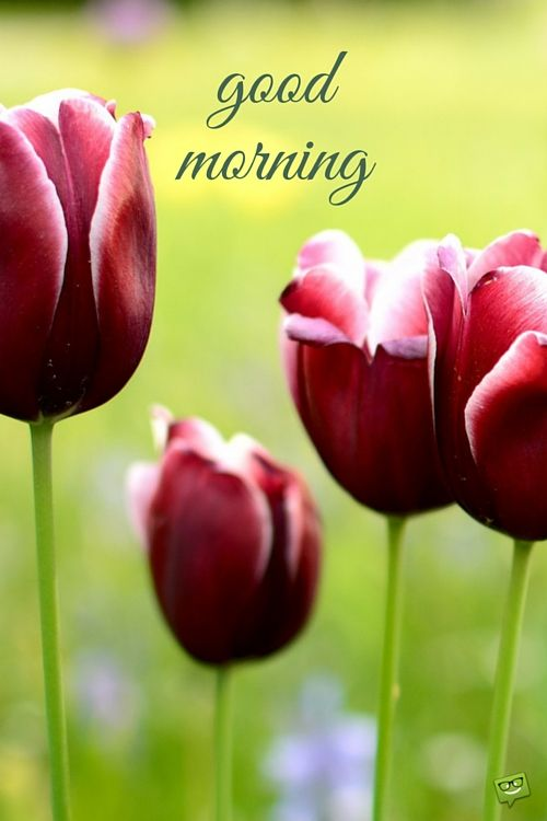 A Great Post For The New Day Good Morning Good Morning Flowers Good Morning Good Morning Images