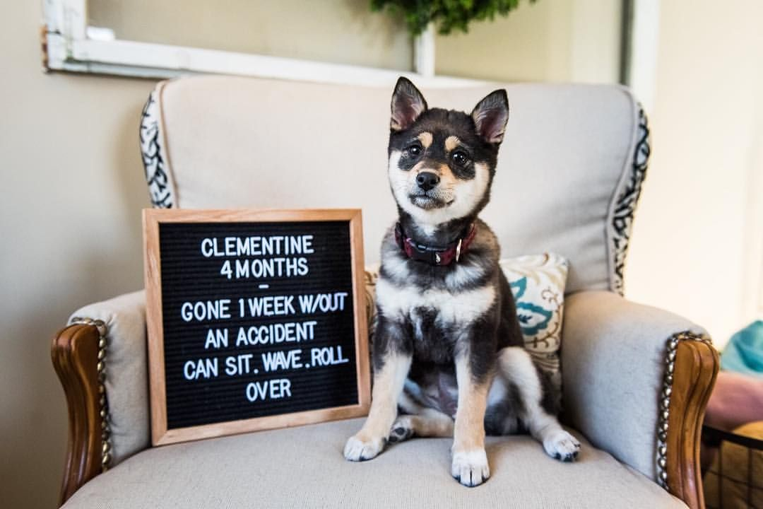 Puppy Monthly Photos, Puppy Letterboards, Monthly Puppy