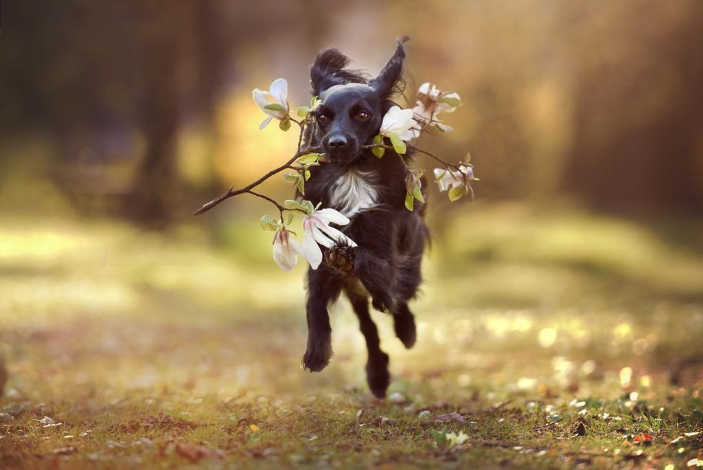 Portfolio Annegeier Com Schone Hunde Ausgestopftes Tier Haustierfotos