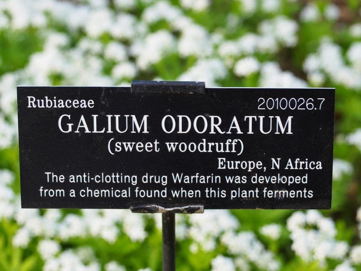 Botanical Horticultural Names Explained Plant Labels Botanical Perfect Plants
