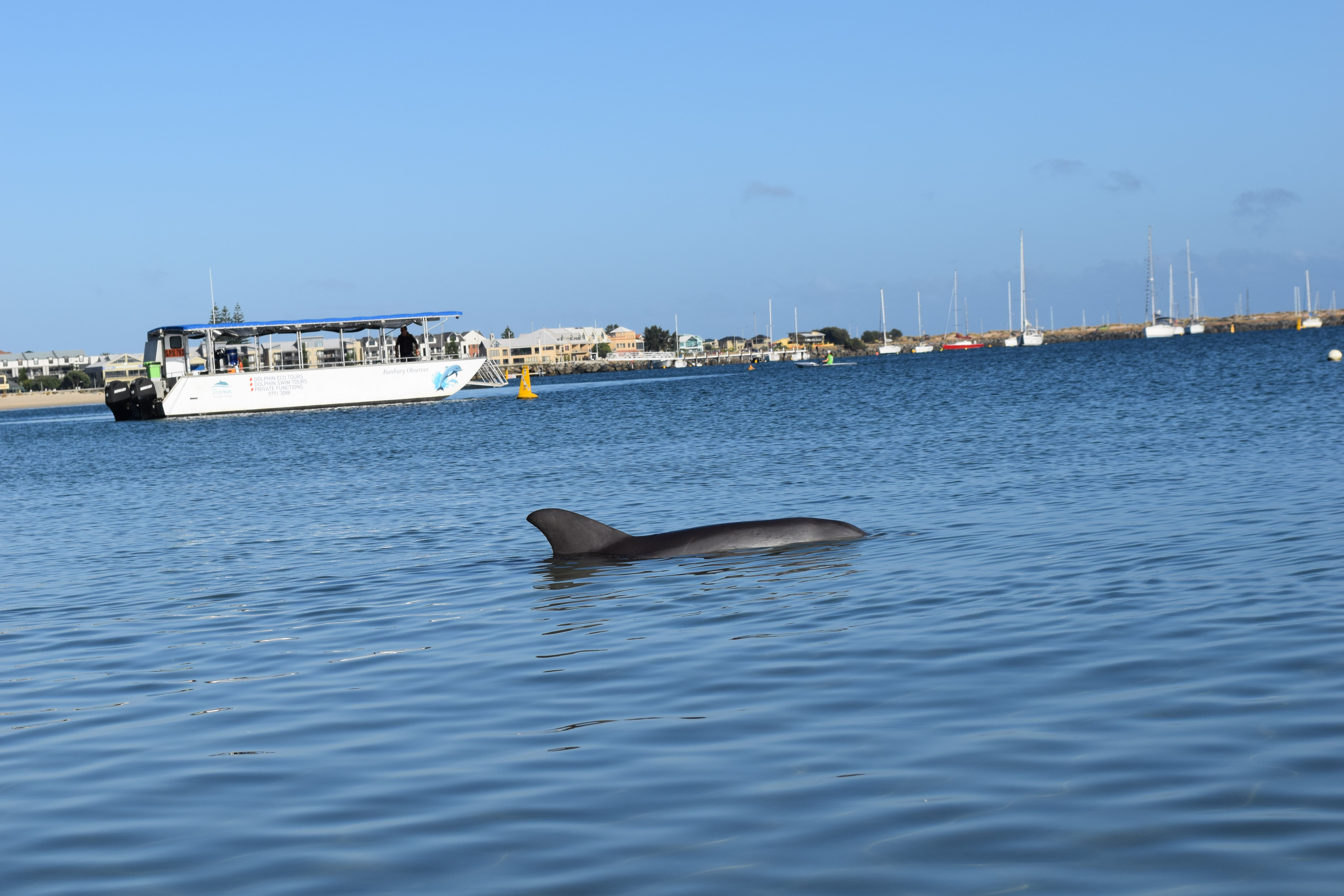 One of our wild dolphins sleeping just outside the