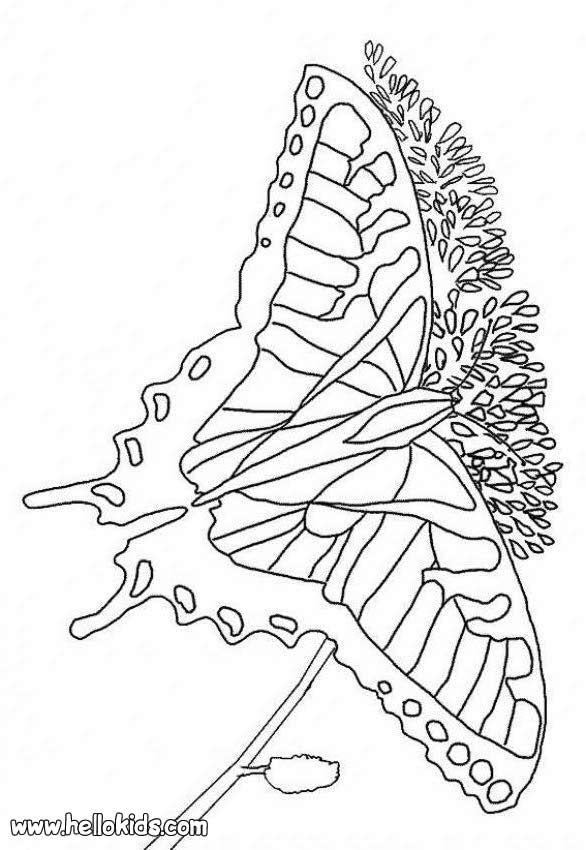 Multicolored Butterfly Coloring Page You Can Print Out This But Also Color Online