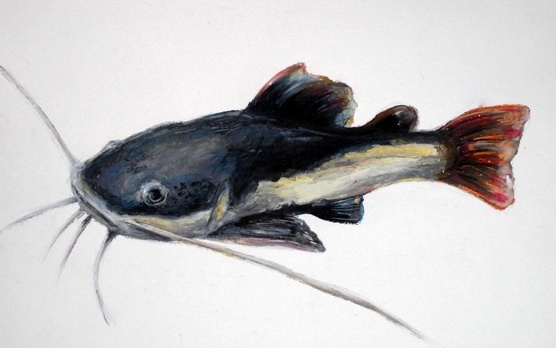 Paintings Of Catfish Google Search Art Inspiration Painting Art