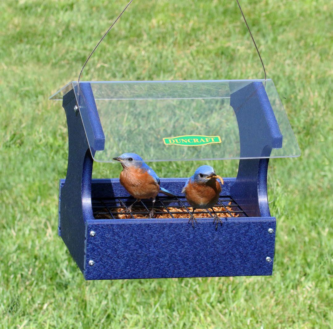 Mealworm Maximizer Bluebird Feeder Blue bird, Backyard