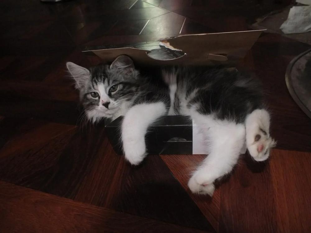 Пин на доске Кошки и коты-интересные фото