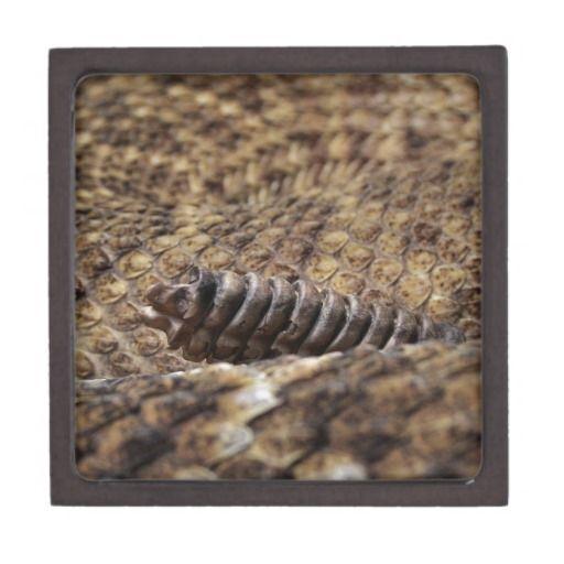 Houston Zoo Premium Jewelry Box - Houston, Zoo, Texas, Reptile, Western, Diamondback, Rattlesnake, Rattle, Snake,