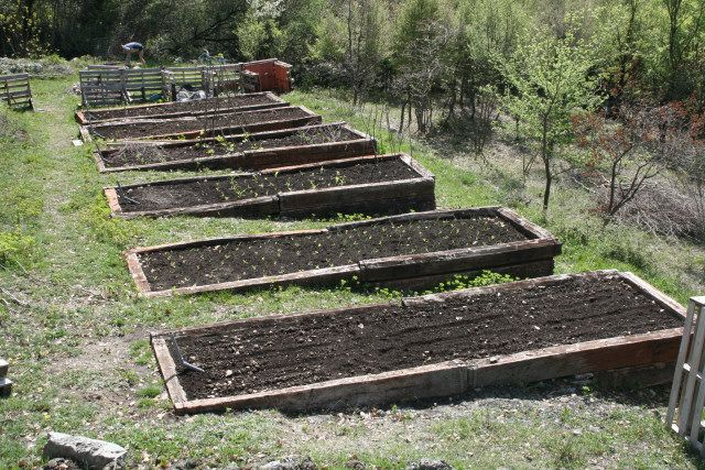 Our beds are filling up! Sloped garden, Garden layout