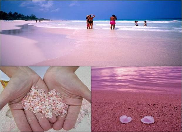 Pink Beach Bahamas One Of The Most Amazing Places In Unusual Color