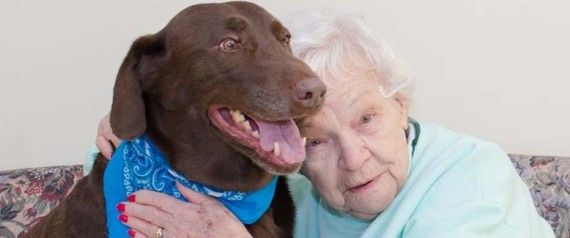 Rusty The Stray Dog Becomes Loyal Companion To Nursing Home Residents Dog Friends Therapy Animals Dogs