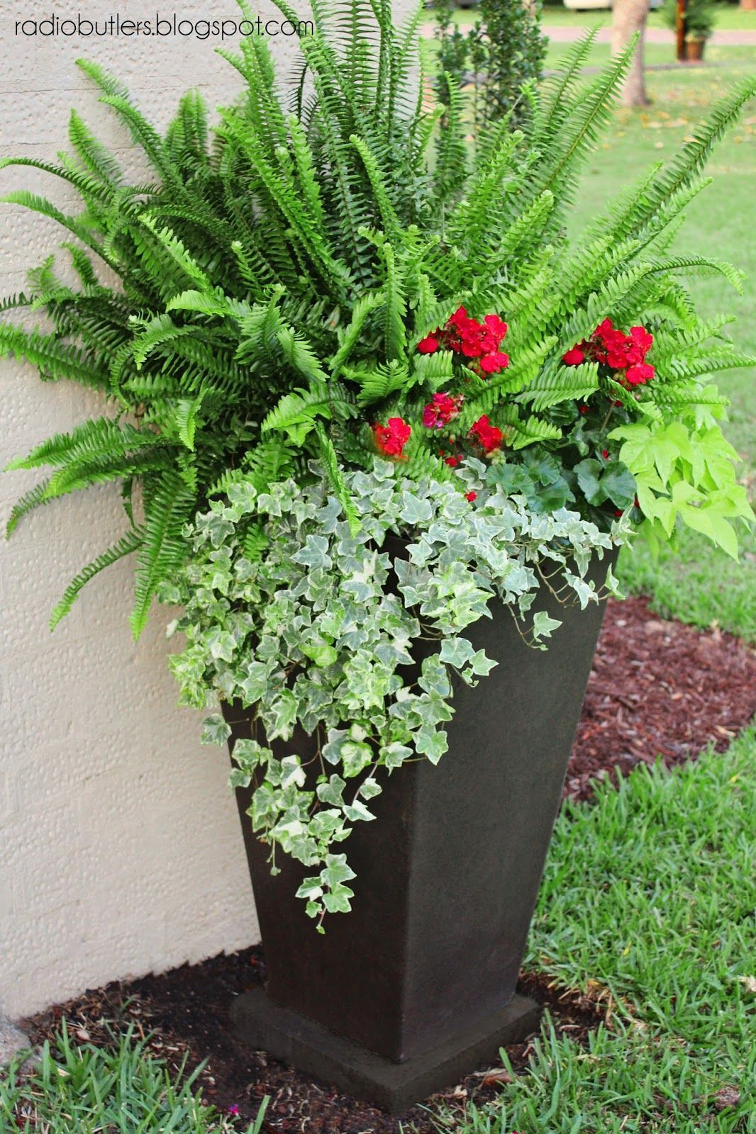 container with sun fern geraniums sweet potato vine and ivy