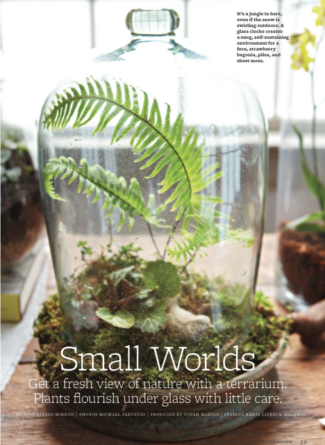 Better Homes And Gardens Terrarium Feature Idees Terrariums