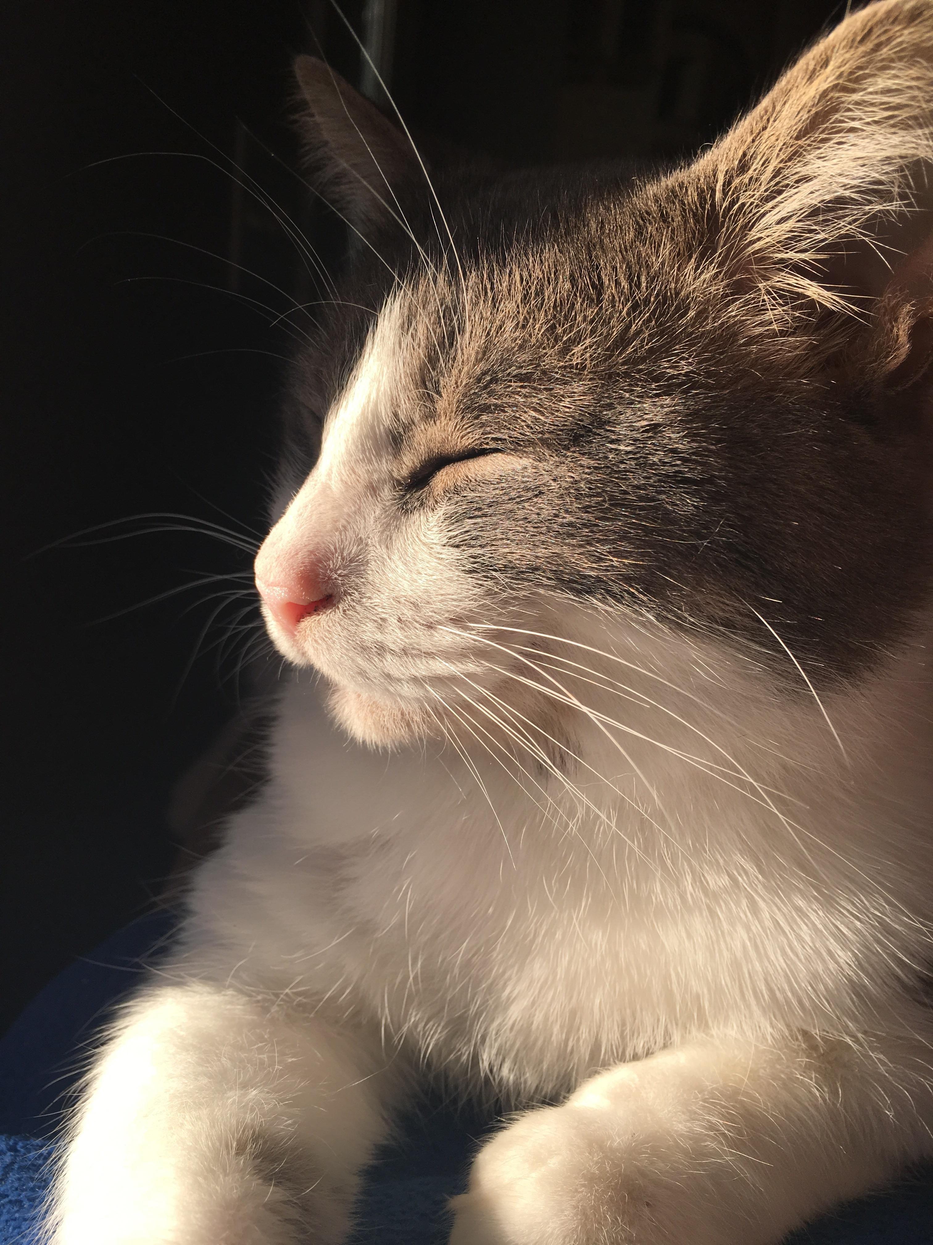 ragdollcat Cute cats, Pretty cats, Cute animals