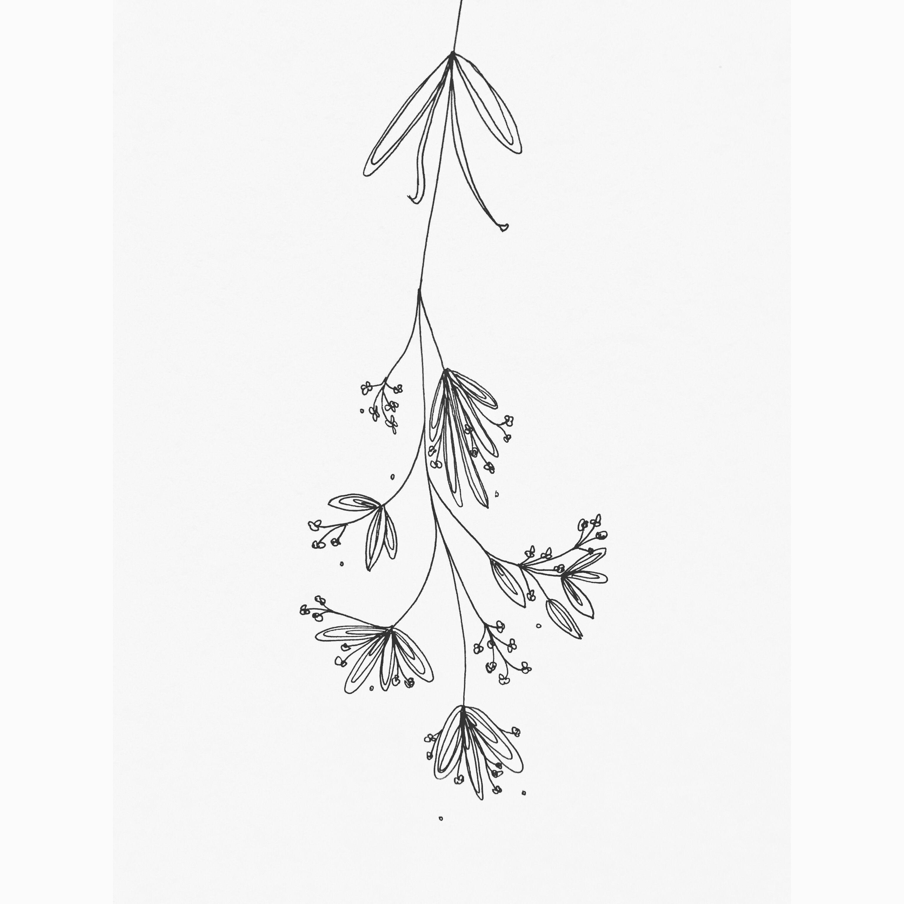 Simple mistletoe drawing images for Illustration minimaliste