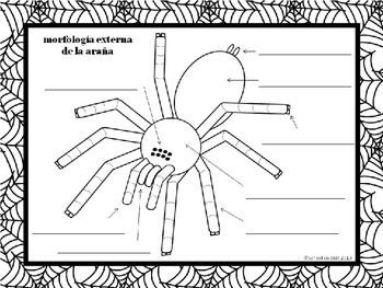 {Free} Label a Spider ~ Etiquetar la araña [Dual Immersion