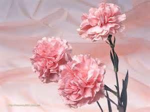 ... Flower Wallpaper >>Index >>Japanese