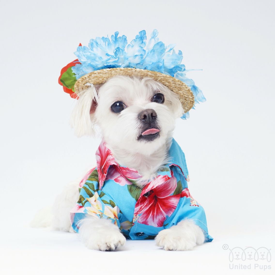 I M Ready For Summer Are You Ready Summer Hawaii Tot