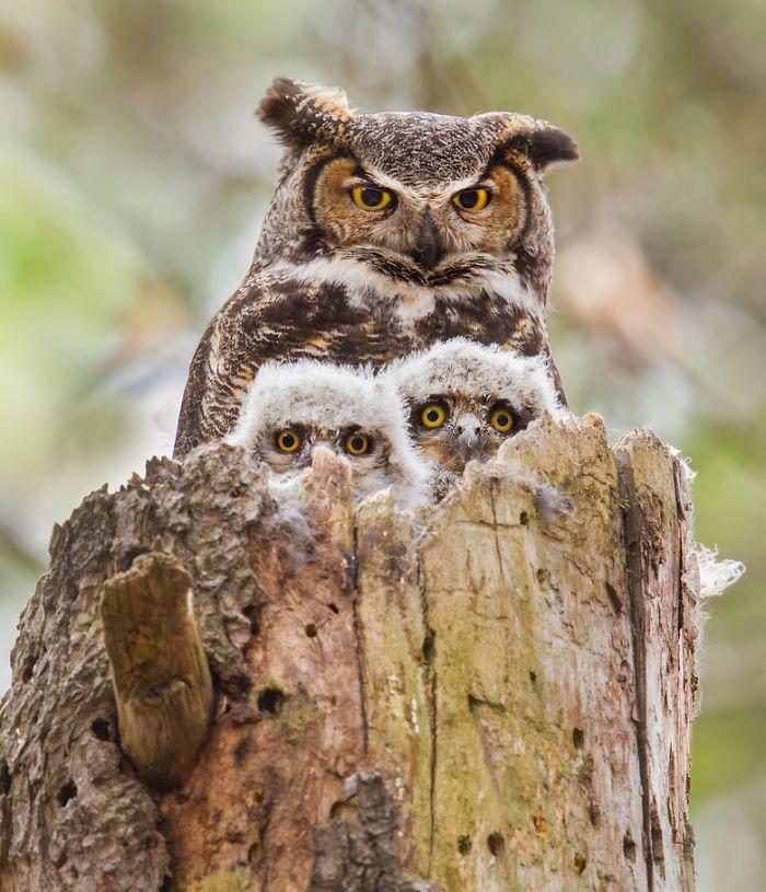 22 imagens que registram momentos em família de animais | Estilo