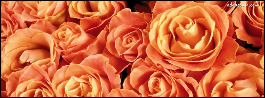 Free Profile Pictures For Facebook Orange Flowers Covers