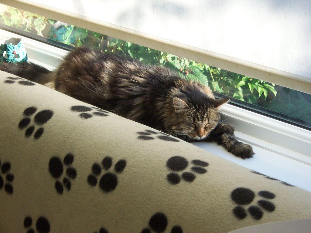 Bella relaxing