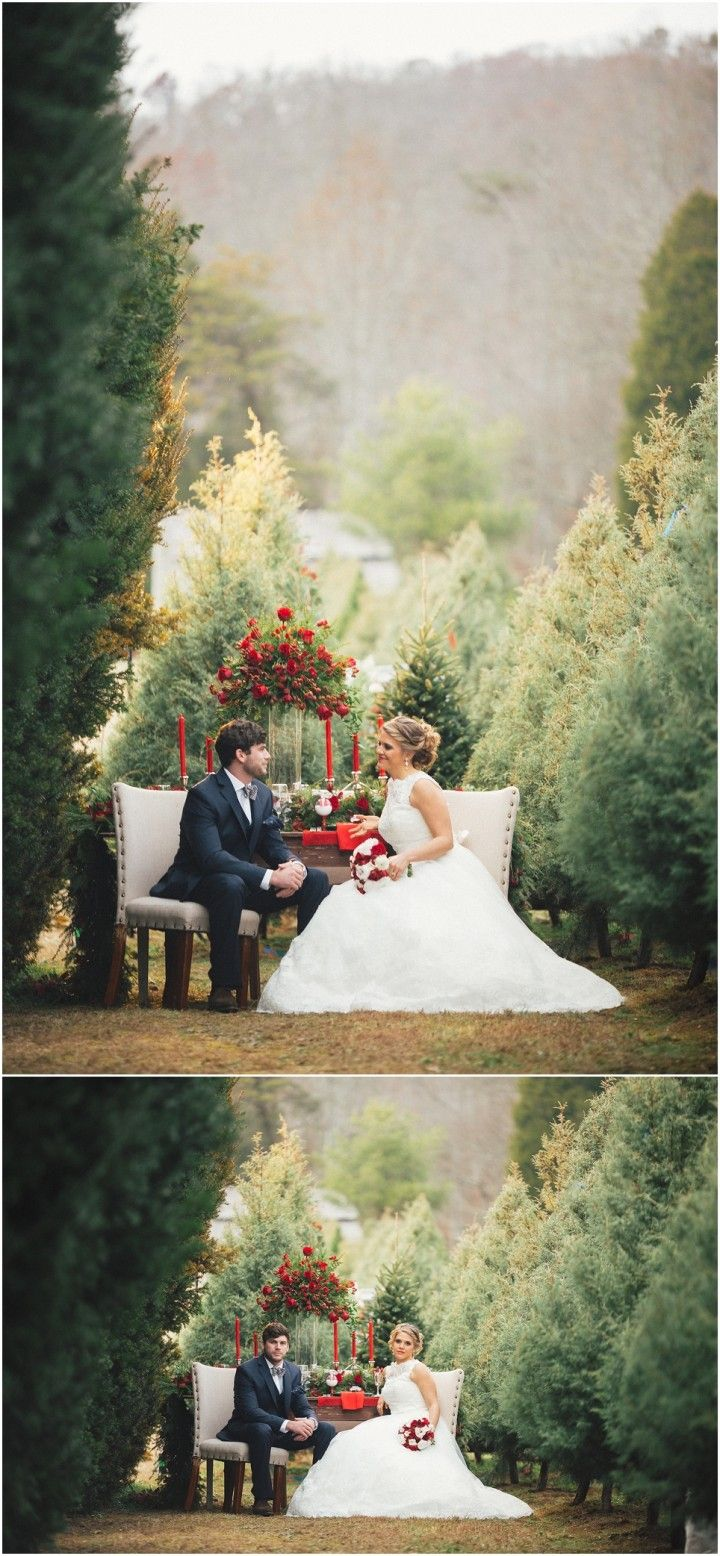 Christmas Tree Farm Wedding Inspiration Knoxville Tn Farm Wedding Christmas Tree Farm Tree Wedding