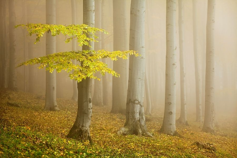 Fairytale Forest by Daniel Řeřicha, via 500px